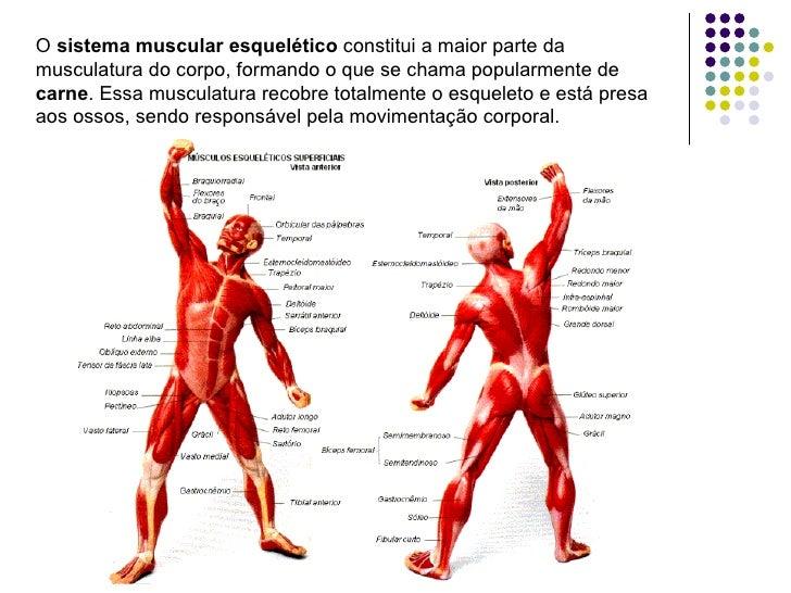 Perfecto Anatomía Y Fisiología Del Sistema Muscular Ppt Imágenes ...