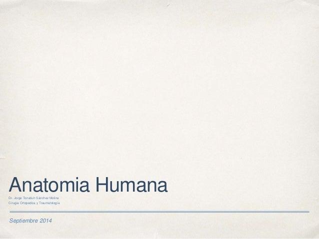 Historia de Anatomia Humana Slide 3
