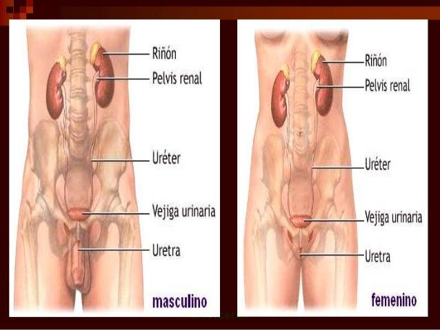 A los dolores en los músculos de la espalda que es necesario hacer