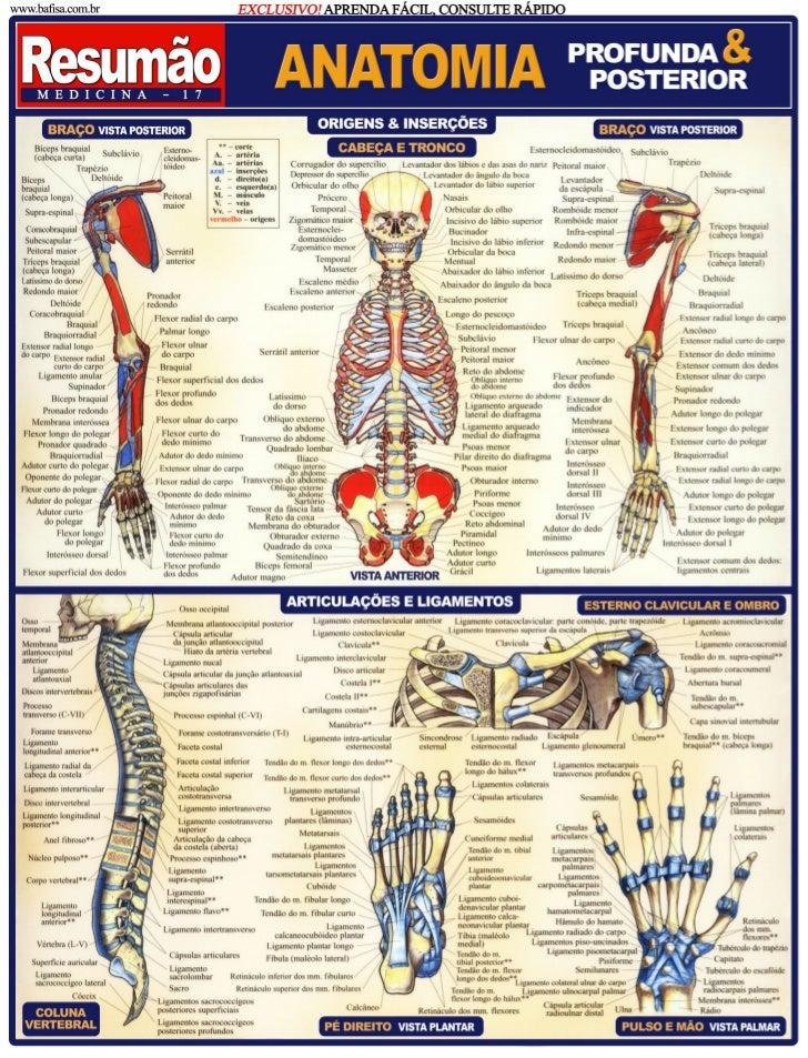 Anatomia humana -_imagens_explicativas_-_resumo_-_maria_ignez_t._franca_-_banner