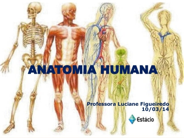 ANATOMIA HUMANA Professora Luciane Figueiredo 10/03/14