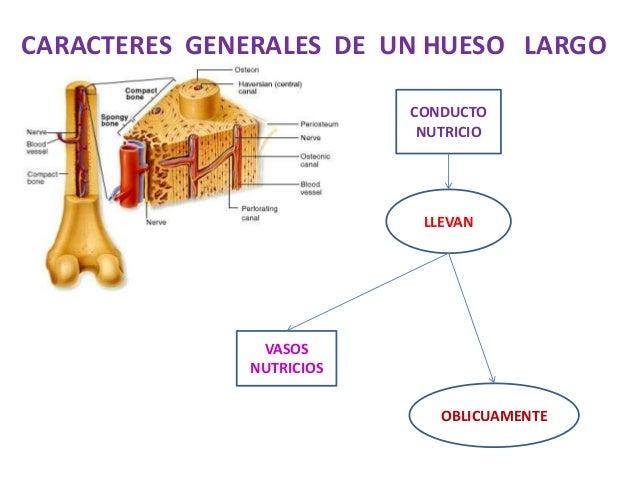 Anatomia humana clase 2