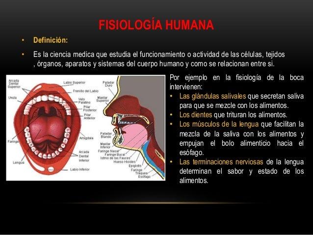 Anatomiahumanafisiologiaehigieneclase for Arquitectura que se estudia