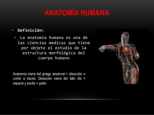 Anatomía humana fisiología e higiene clase 2