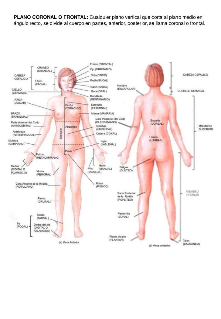 Moderno Cuerpo Humano Mujer Patrón - Anatomía de Las Imágenesdel ...