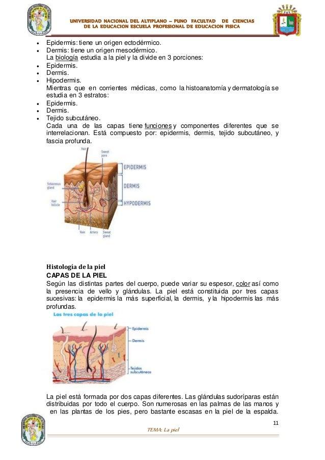 Anatomia humana la piel