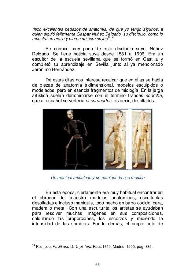 Anatomia humana para artistas