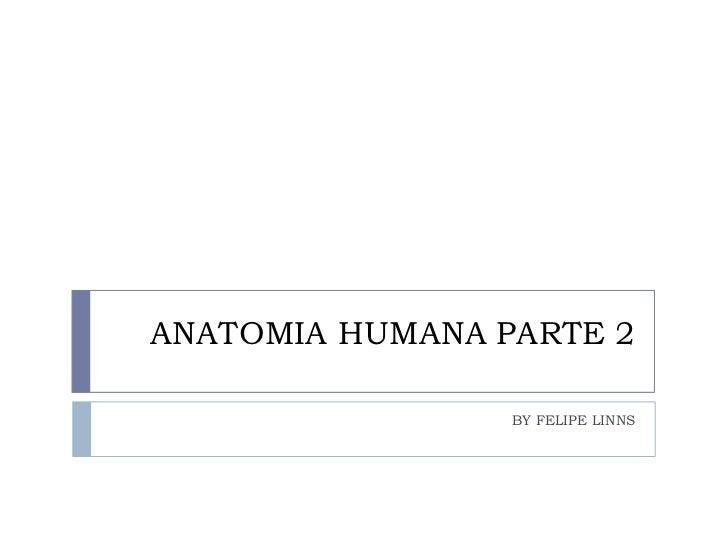 ANATOMIA HUMANA PARTE 2<br />BY FELIPE LINNS<br />