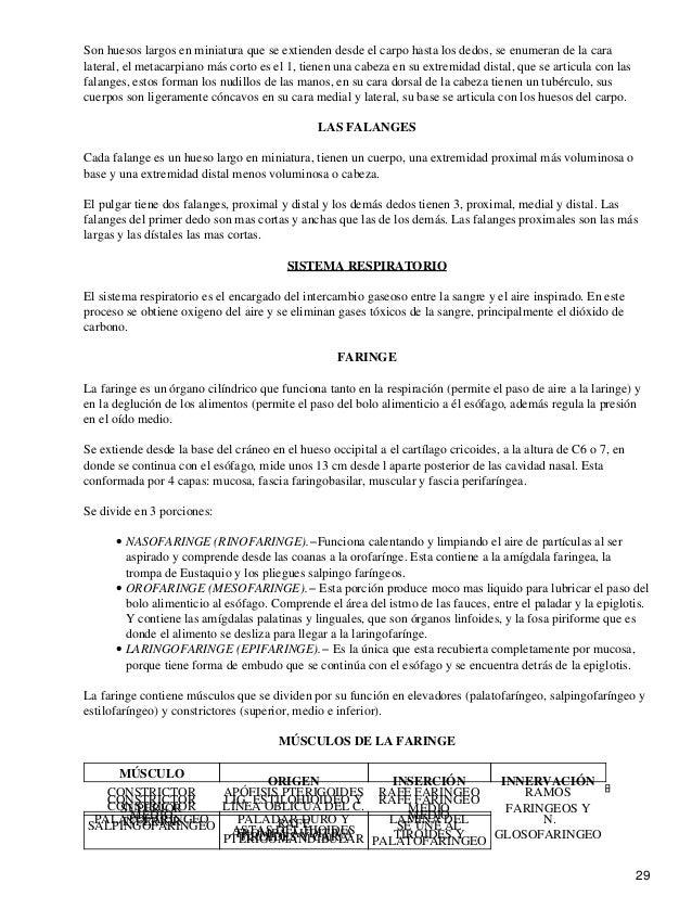 Dorable Anatomía De La Fe Modelo - Imágenes de Anatomía Humana ...