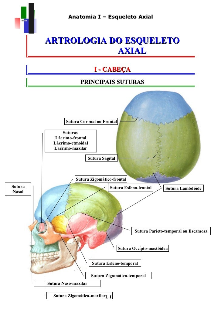Anatomia I – Esqueleto Axial         ARTROLOGIA DO ESQUELETO                     AXIAL                                  I ...