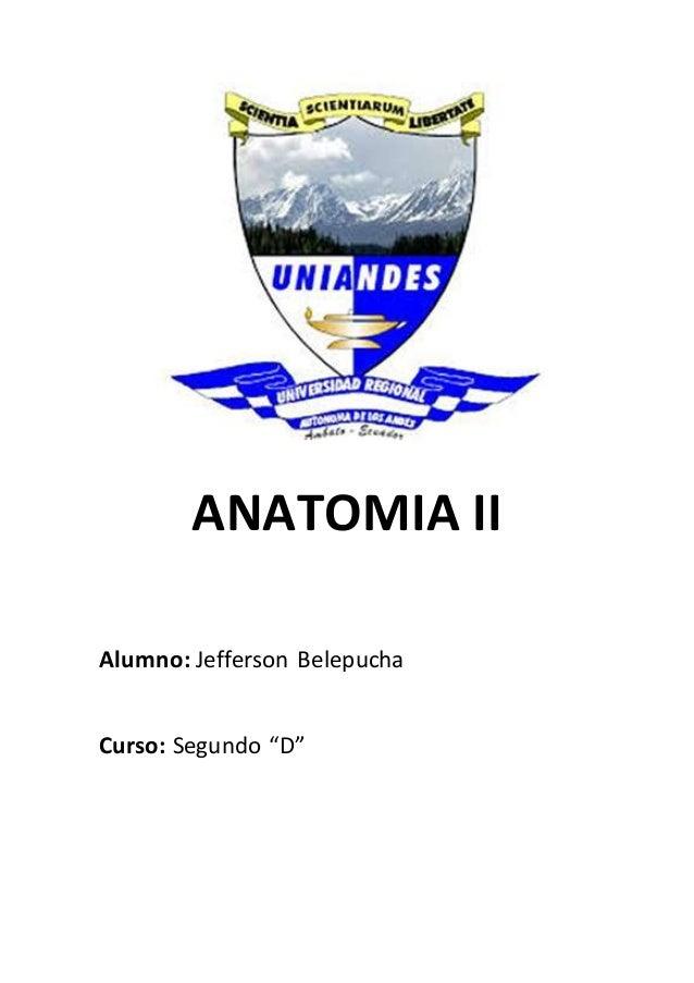 "ANATOMIA II Alumno: Jefferson Belepucha Curso: Segundo ""D"""