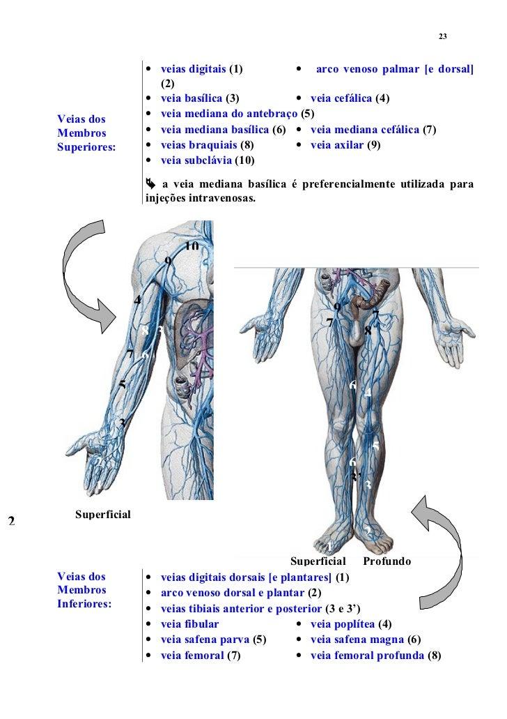 Moderno Arco Compuesto Anatomía Bandera - Imágenes de Anatomía ...