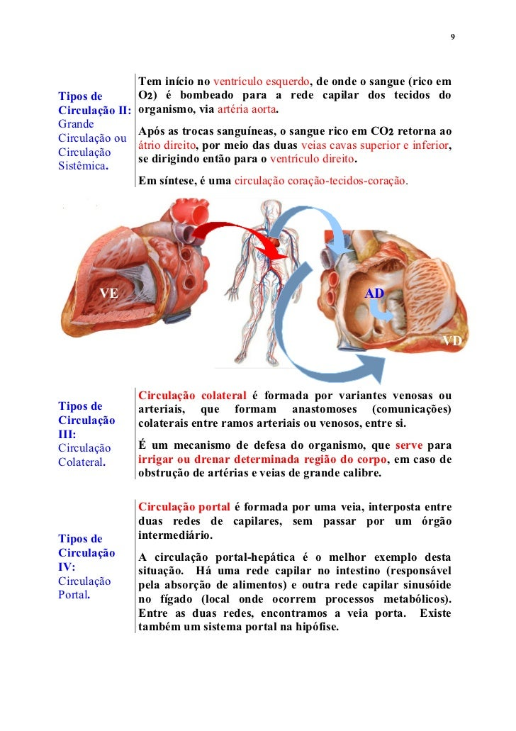 Lujo Anatomía Del Sistema Portal Galería - Imágenes de Anatomía ...