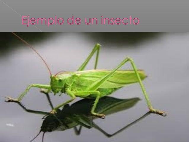 Anatomia interna de los insectos