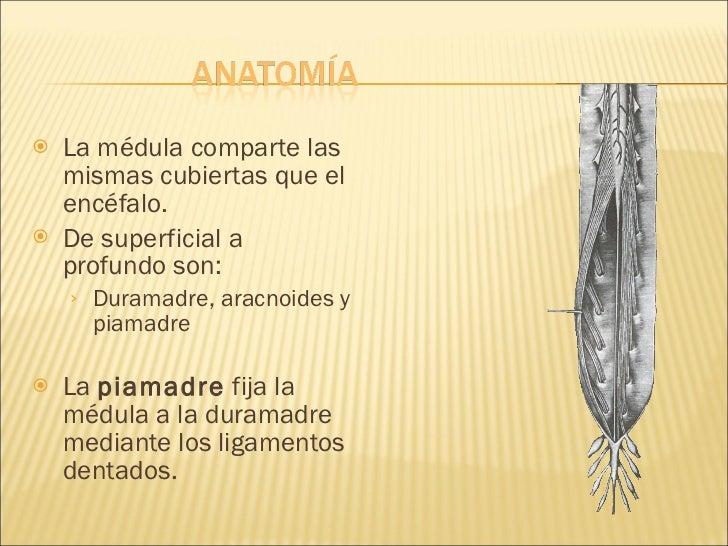 Anatomia Medula Espinal