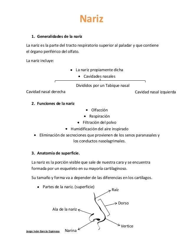 Jorge Iván García Espinosa 1. Generalidades de la nariz La nariz es la parte del tracto respiratorio superior al paladar y...