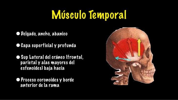Anatomia oclusion
