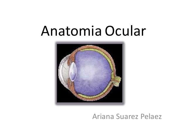 Anatomia Ocular Ariana Suarez Pelaez