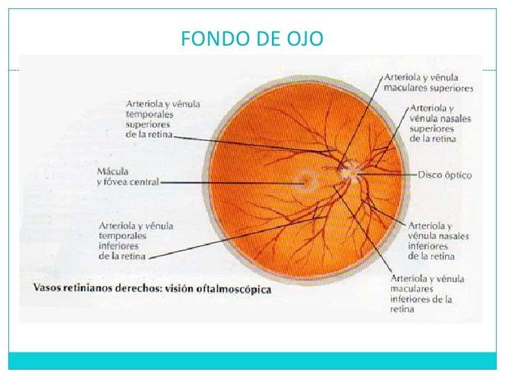 Dorable Fondo De La Anatomía Del Ojo Colección de Imágenes ...