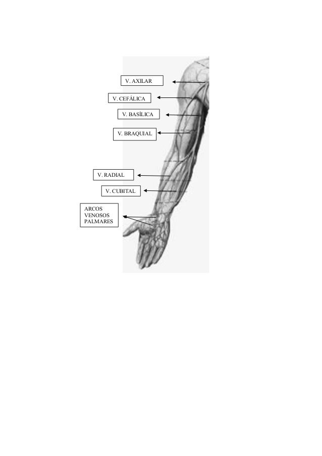 Anatomia osteoarticular