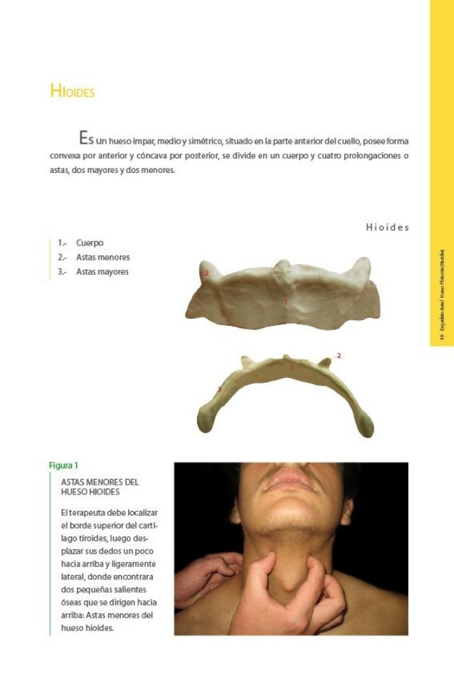 Anatomia palpatoria (libro) - atlas fotografico de osteologia con o…