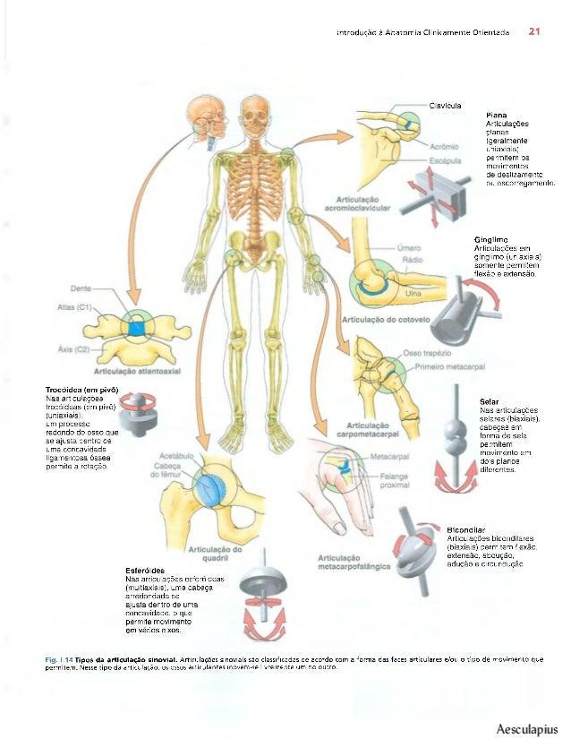 Contemporáneo Anatomía Keith Moore Foto - Imágenes de Anatomía ...