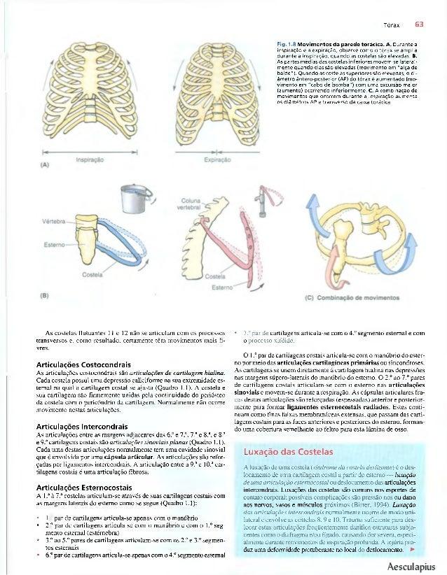 Anatomia para a Clinica Moore 4°ed.