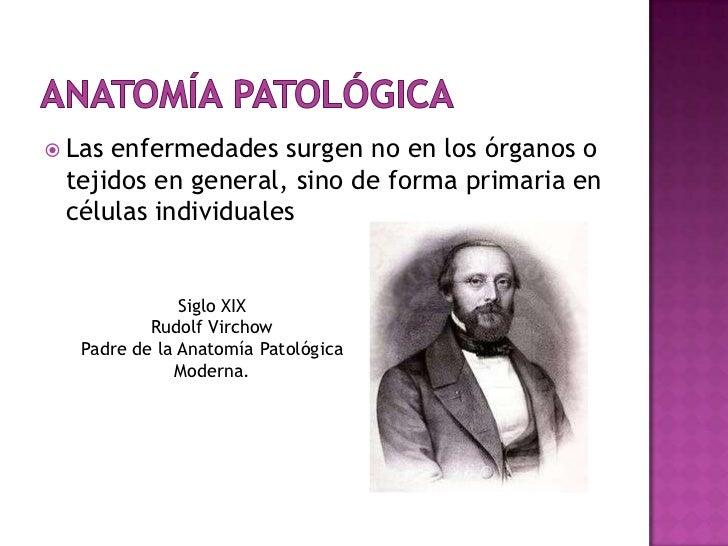 Excepcional Padre De La Anatomía Moderna Elaboración - Anatomía de ...