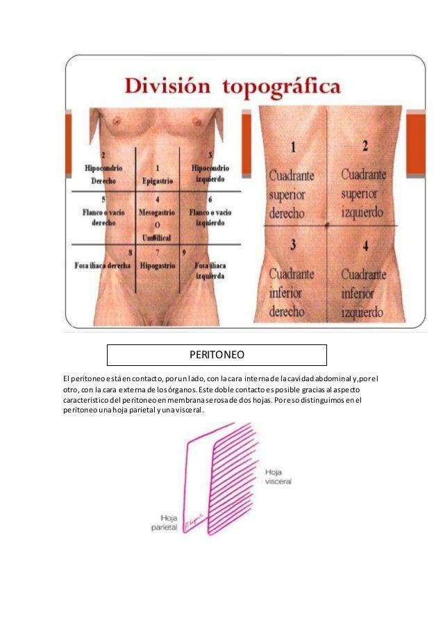 Anatomia peritoneo