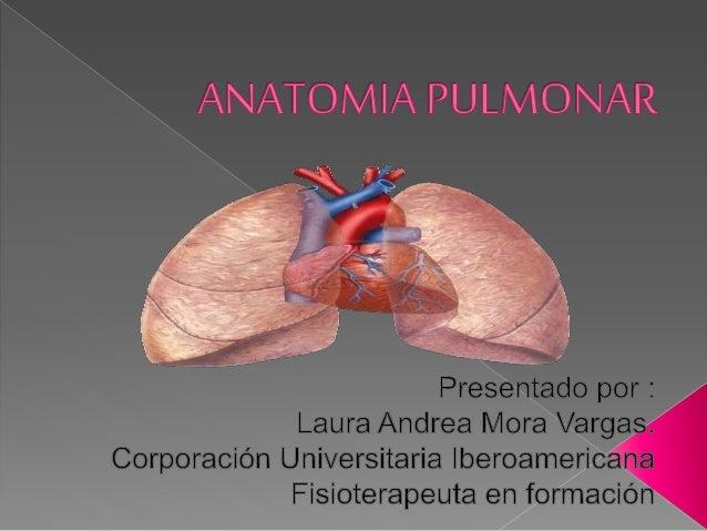 Anatomia pulmonar