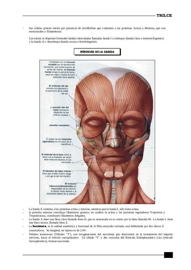 Anatomia quinto secundaria i