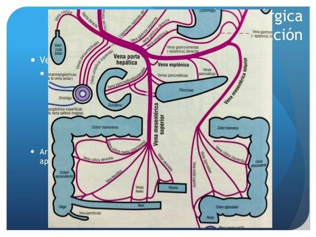 Irrigacion del apendice pdf printer