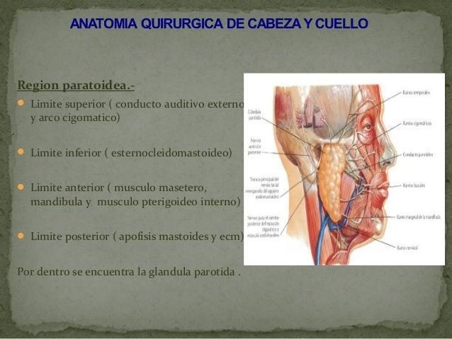 Anatomia quirurgica de cabeza y cuello