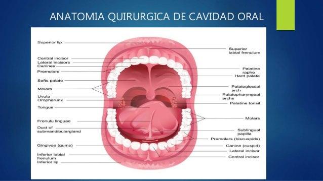 Anatomía quirúrgica de Cavidad Oral