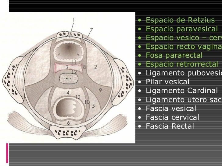 Anatomia quirurgica recto anal