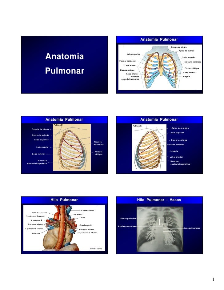 Lujo Anatomía De Un Lobo Imágenes - Imágenes de Anatomía Humana ...