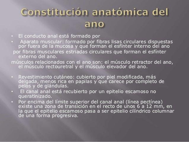 Anatomia recto y ano