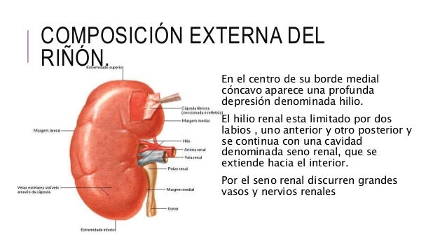 Anatomia y fisiologia renal