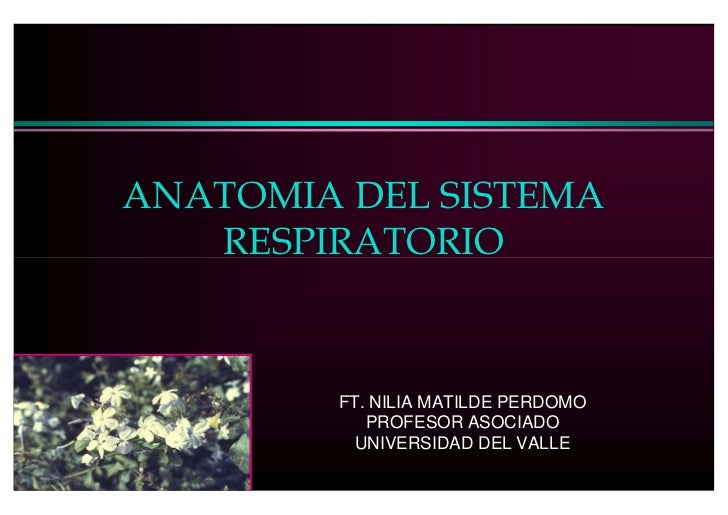 ANATOMIA DEL SISTEMA    RESPIRATORIO            FT. NILIA MATILDE PERDOMO            PROFESOR ASOCIADO           UNIVERSID...