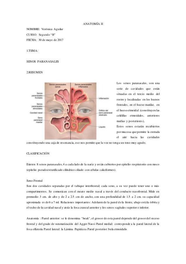 Anatomia senos nasales