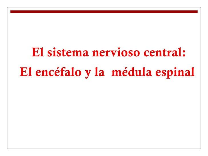 El sistema nervioso central: El encéfalo y la  médula espinal