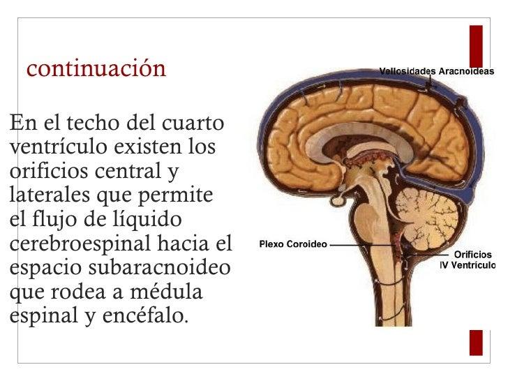 continuación <ul><li>En el techo del cuarto ventrículo existen los orificios central y laterales que permite el flujo de l...
