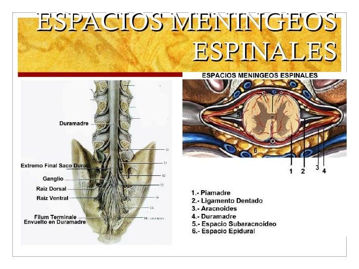 ESPACIOS MENINGEOS ESPINALES