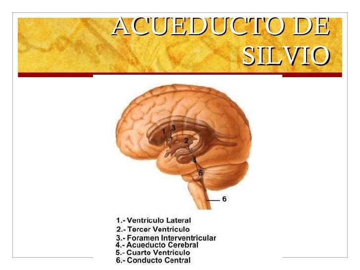 ACUEDUCTO DE SILVIO