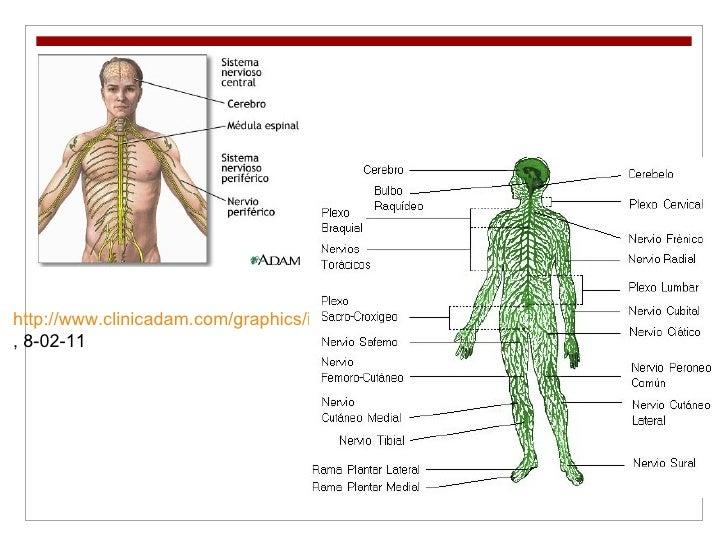 http://www.clinicadam.com/graphics/images/es/8679.jpg , 8-02-11