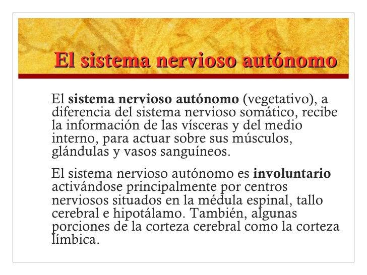 El sistema nervioso autónomo <ul><li>El  sistema nervioso autónomo  (vegetativo), a diferencia del sistema nervioso somáti...