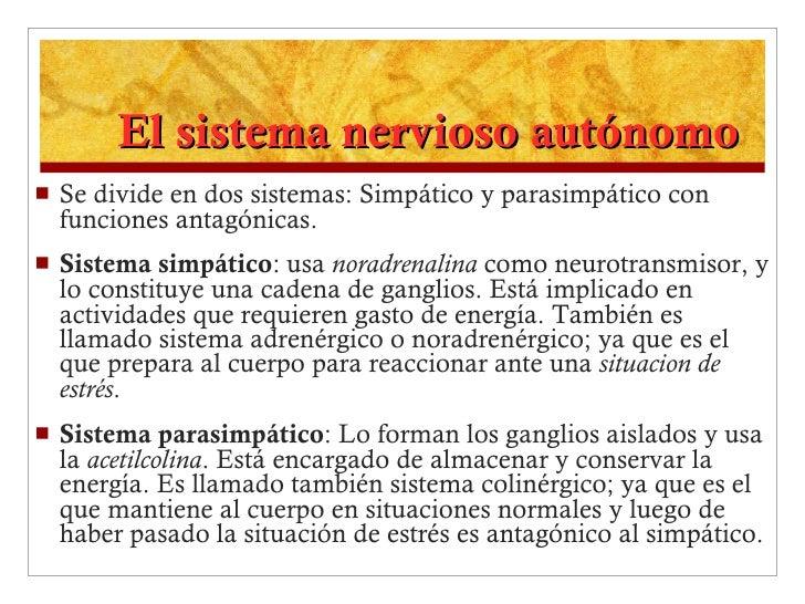 El sistema nervioso autónomo <ul><li>Se divide en dos sistemas: Simpático y parasimpático con funciones antagónicas. </li>...