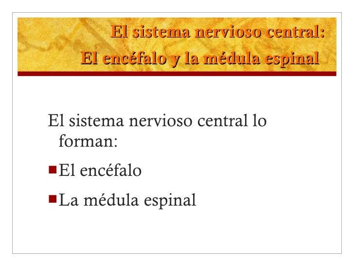 El sistema nervioso central: El encéfalo y la médula espinal   <ul><li>El sistema nervioso central lo forman: </li></ul><u...