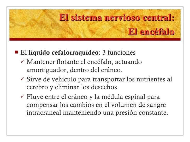 El sistema nervioso central: El encéfalo <ul><li>El  líquido cefalorraquídeo : 3 funciones </li></ul><ul><ul><li>Mantener ...