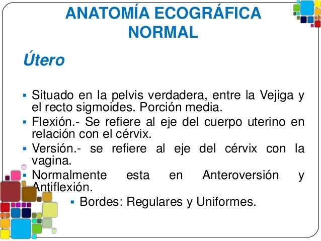 Anatomia sonografica de la pelvis femenina